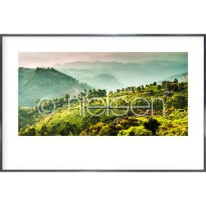 """Image encadrée """"Landscape of Tea Plantations"""" avec cadre en aluminium Alpha"""