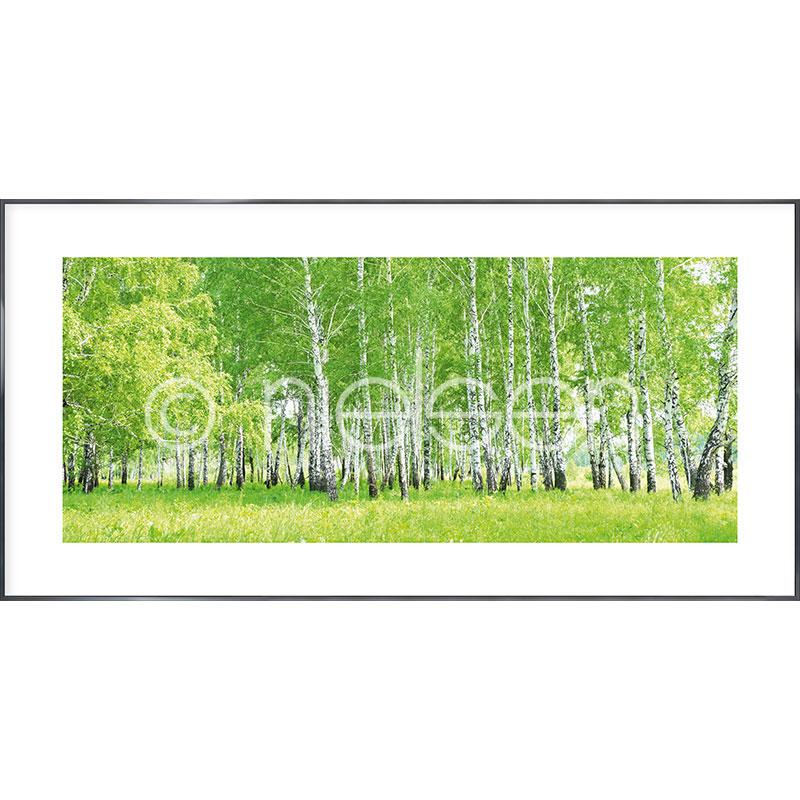 """Image encadrée """"Birch Forest"""" avec cadre en aluminium Alpha"""