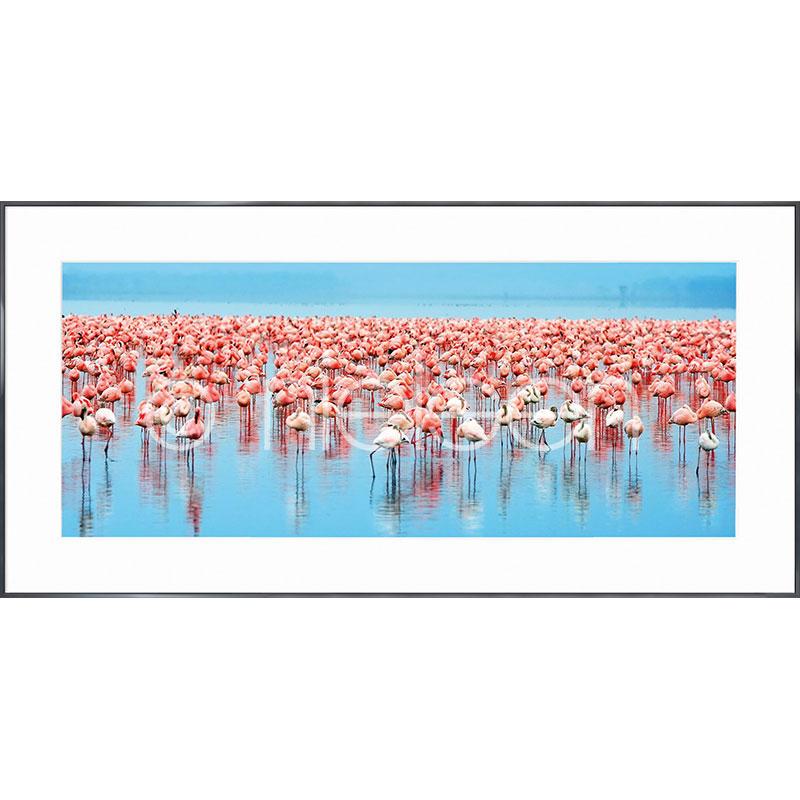 """Image encadrée """"Flamingos"""" avec cadre en aluminium Alpha"""