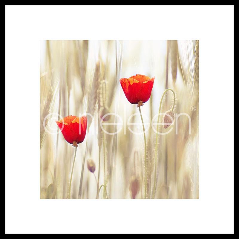 """Image encadrée """"Flower Cornfield"""" avec cadre en aluminium C2"""