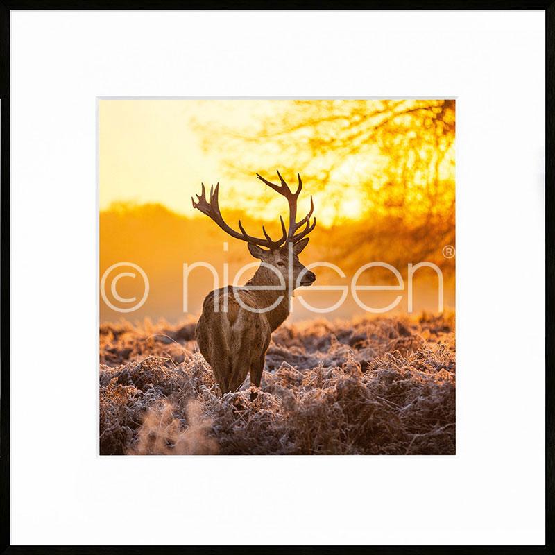 """Image encadrée """"Cervine Sunset"""" avec cadre en aluminium C2"""