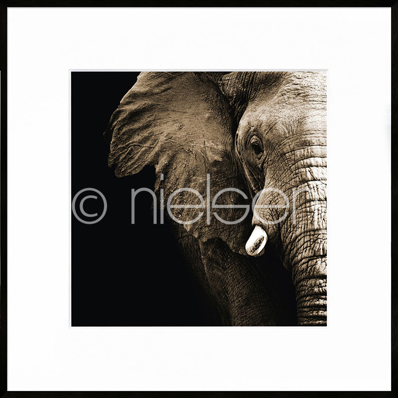 "Image encadrée ""Elephant"" avec cadre en aluminium C2"