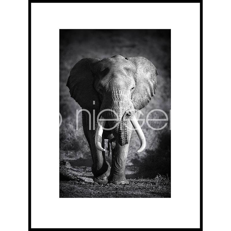 """Image encadrée """"Elephant black and white"""" avec cadre en aluminium C2"""