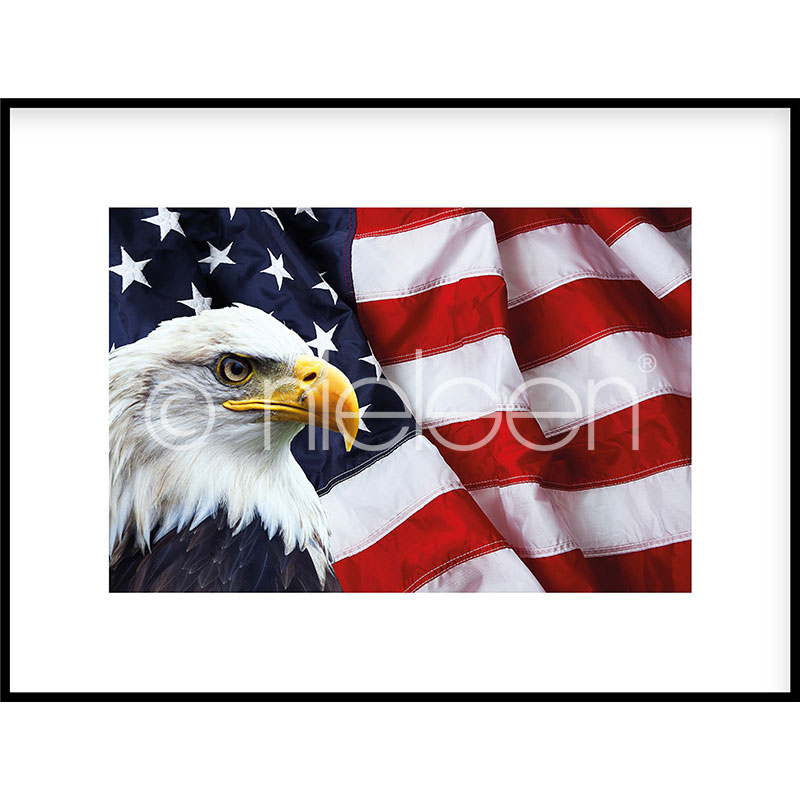 "Image encadrée ""Eagle USA"" avec cadre en aluminium C2"