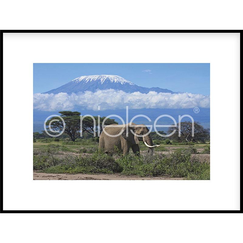 """Image encadrée """"Elephant Prairie"""" avec cadre en aluminium C2"""