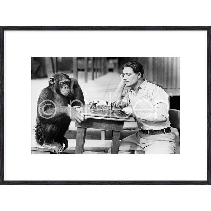 """Image encadrée """"Monkey chess"""" avec cadre en bois Quadrum"""