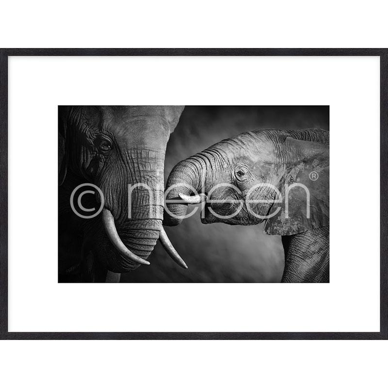 """Image encadrée """"Elephant Baby"""" avec cadre en bois Quadrum"""