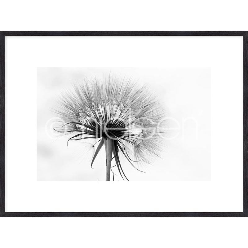 """Image encadrée """"Dandelion abstract"""" avec cadre en bois Quadrum"""