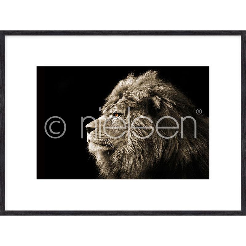 """Image encadrée """"Lion black and white"""" avec cadre en bois Quadrum"""