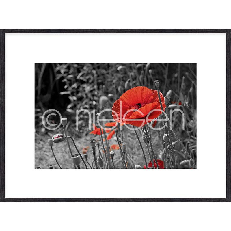 """Image encadrée """"Red Poppy Flower"""" avec cadre en bois Quadrum"""