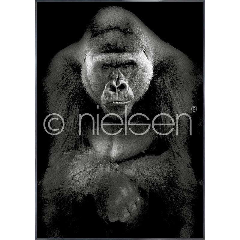 """Image encadrée """"Gorilla"""" avec cadre en aluminium Alpha"""