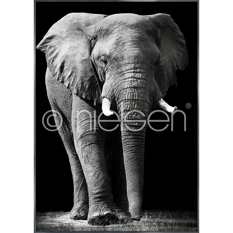 """Image encadrée """"Elephant black and white"""" avec cadre en aluminium Alpha"""