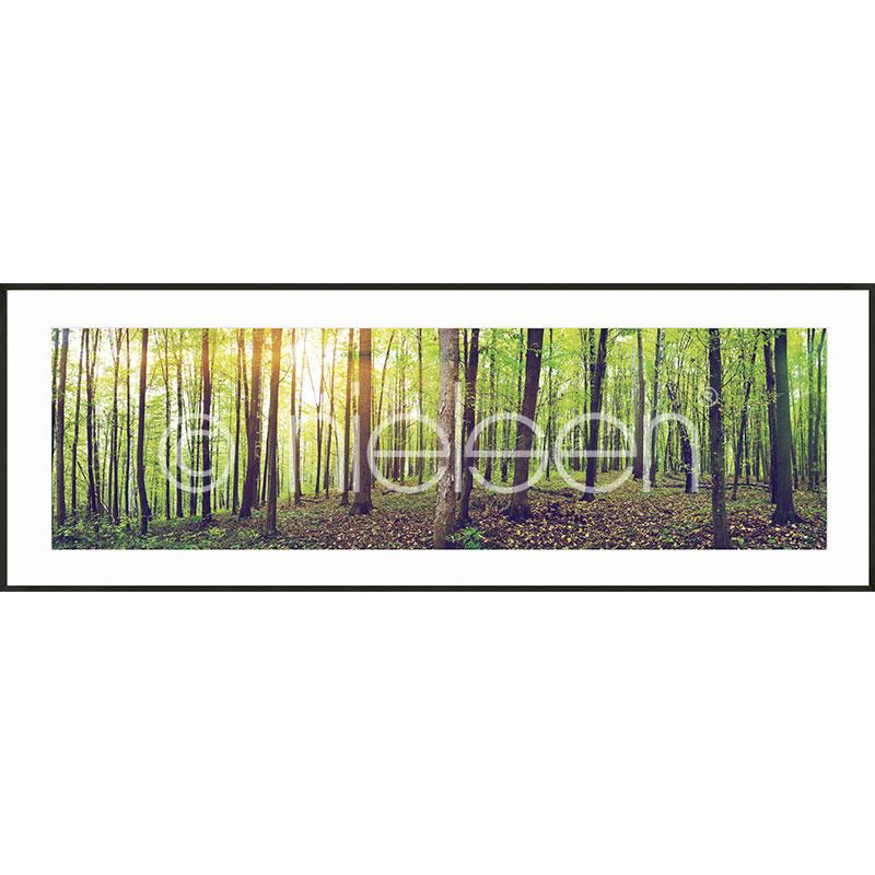 """Image encadrée """"Forest"""" avec cadre en aluminium C2"""