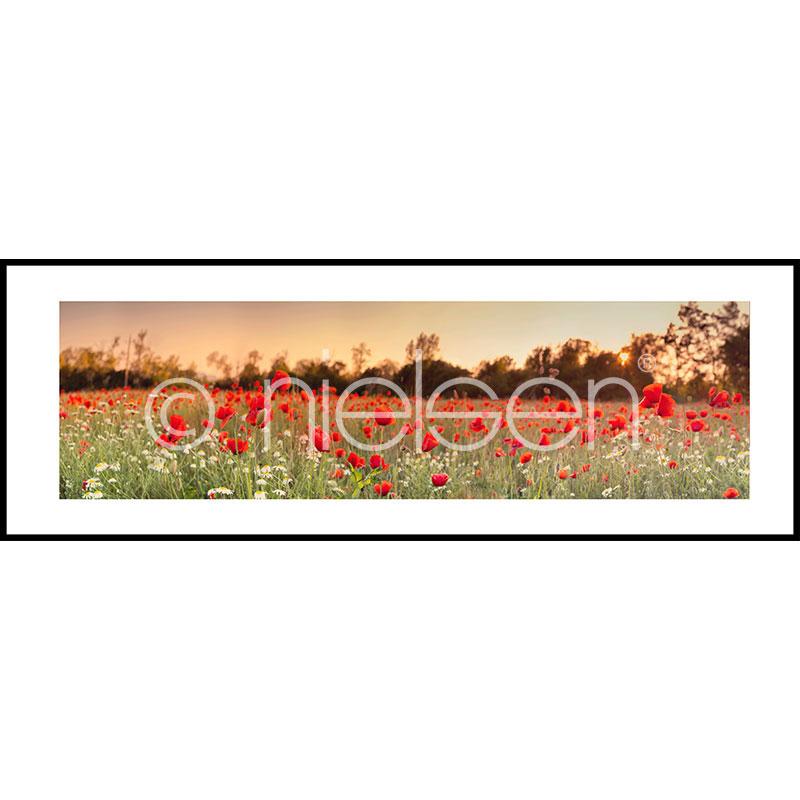 "Image encadrée ""Poppy Flower Field"" avec cadre en aluminium C2"
