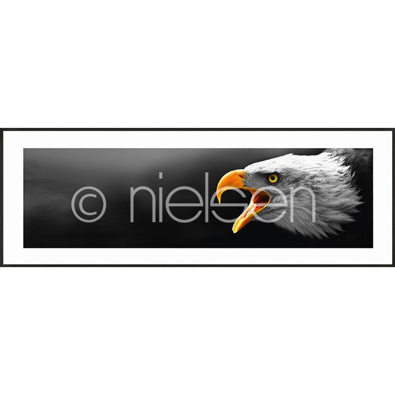 "Image encadrée ""Eagle"" avec cadre en aluminium C2"