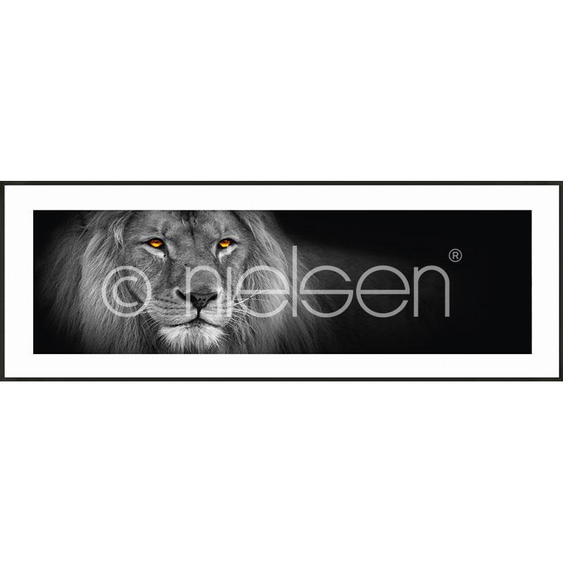 """Image encadrée """"Lion black and white"""" avec cadre en aluminium C2"""